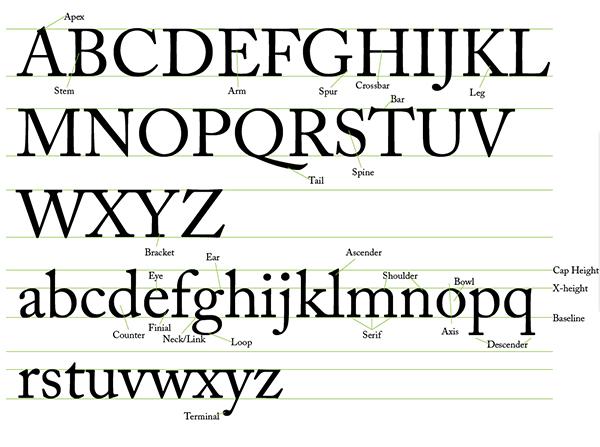 Typeface Anatomy - Typography 101
