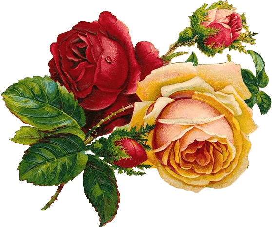 TinyPNG : Flowers