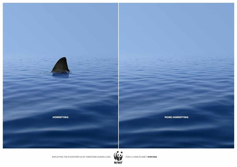 WWF - Photo with shark fin - photo without fin