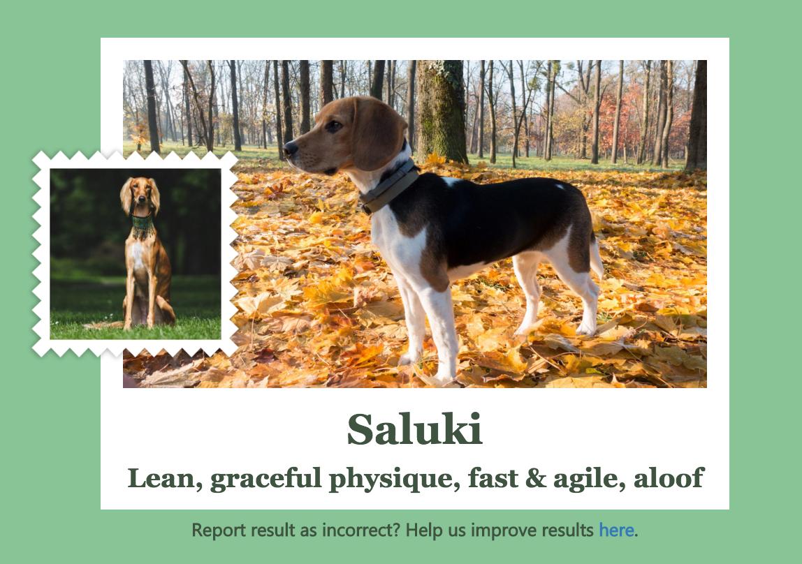 The app identifies a beagle as a Saluki