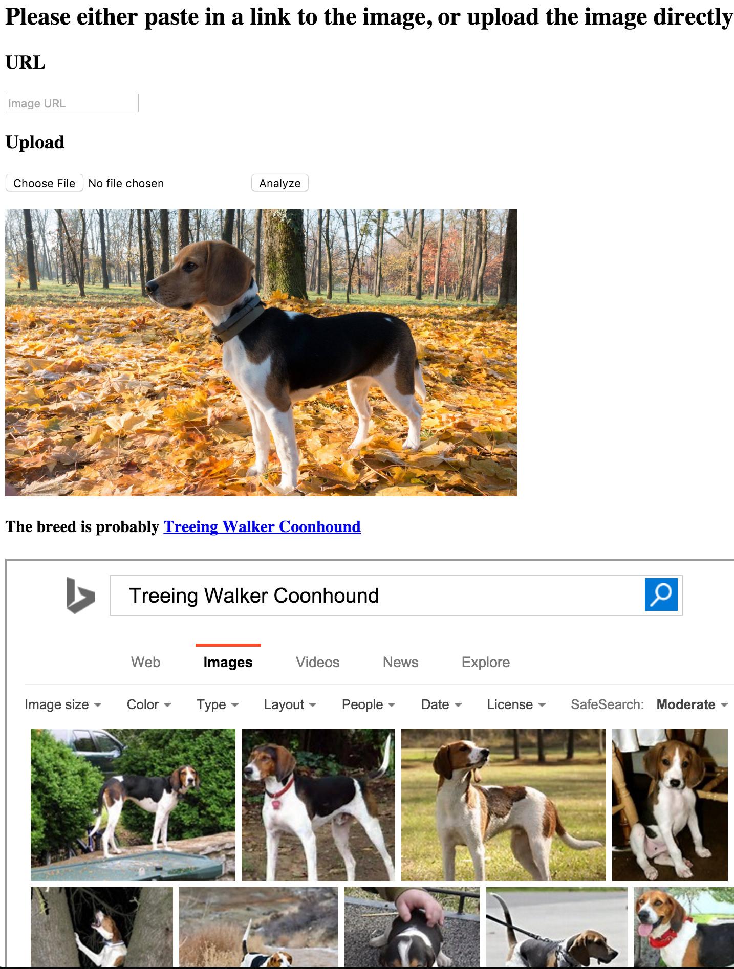 Beagle slightly misidentified