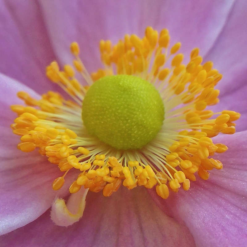 Close up of a flower.