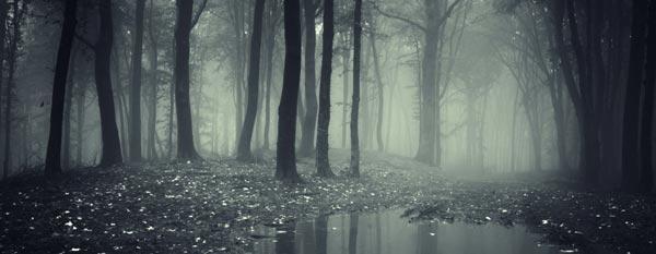 Murky forest