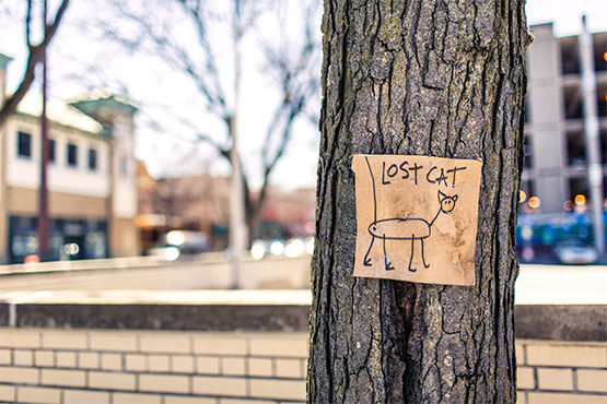 Lost cat sign on a tree