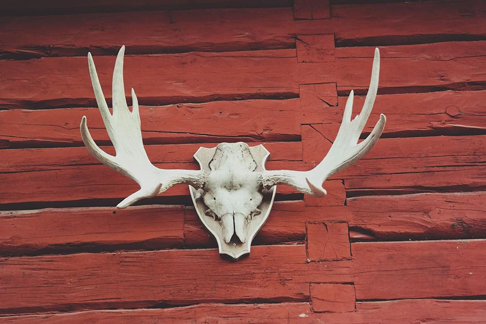 A hunting trophy