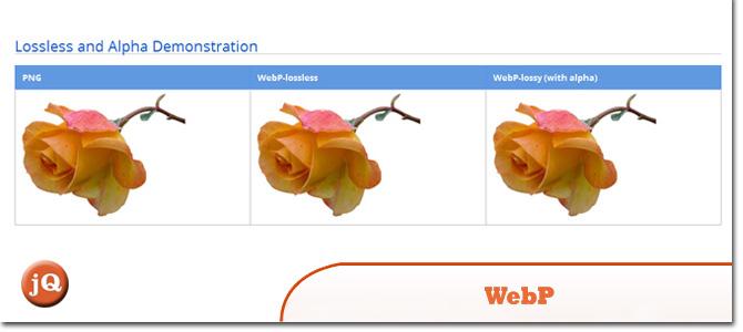 WebP.jpg